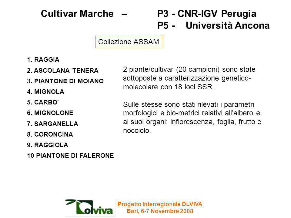Cultivar Marche – P3 - CNR-IGV Perugia P5 - Università Ancona 1. RAGGIA 2. ASCOLANA TENERA 3. PIANTONE DI MOIANO 4. MIGNOLA 5. CARBO' 6. MIGNOLONE 7.