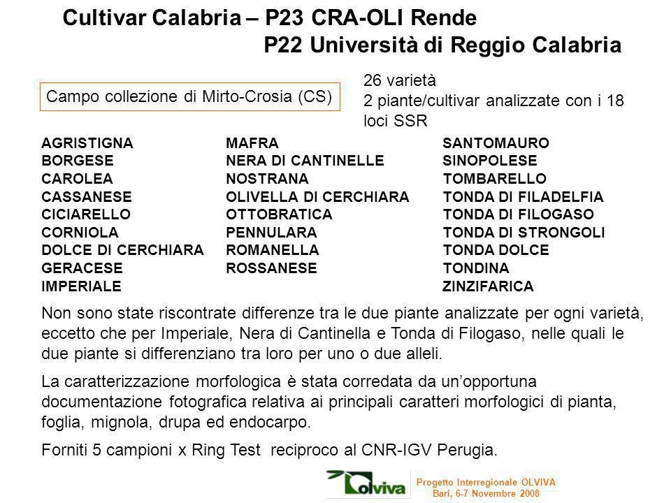 26 varietà 2 piante/cultivar analizzate con i 18 loci SSR Cultivar Calabria – P23 CRA-OLI Rende P22 Università di Reggio Calabria Non sono state risco
