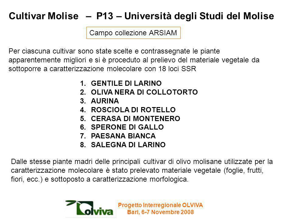 Cultivar Molise – P13 – Università degli Studi del Molise 1.GENTILE DI LARINO 2.OLIVA NERA DI COLLOTORTO 3.AURINA 4.ROSCIOLA DI ROTELLO 5.CERASA DI MO