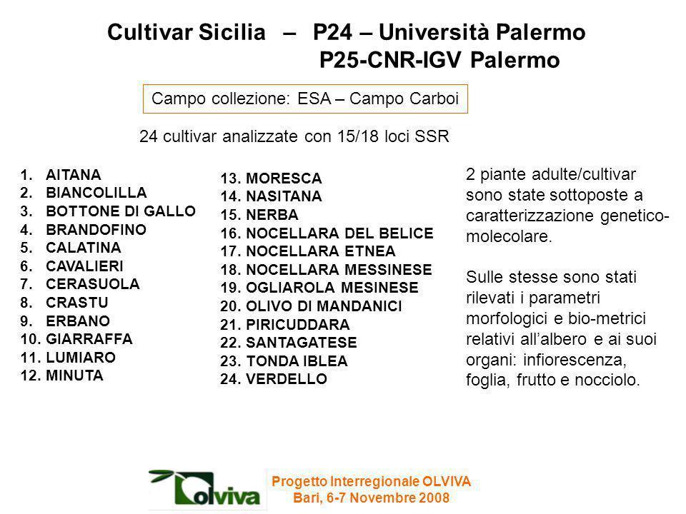 Cultivar Sicilia – P24 – Università Palermo P25-CNR-IGV Palermo 24 cultivar analizzate con 15/18 loci SSR 2 piante adulte/cultivar sono state sottopos