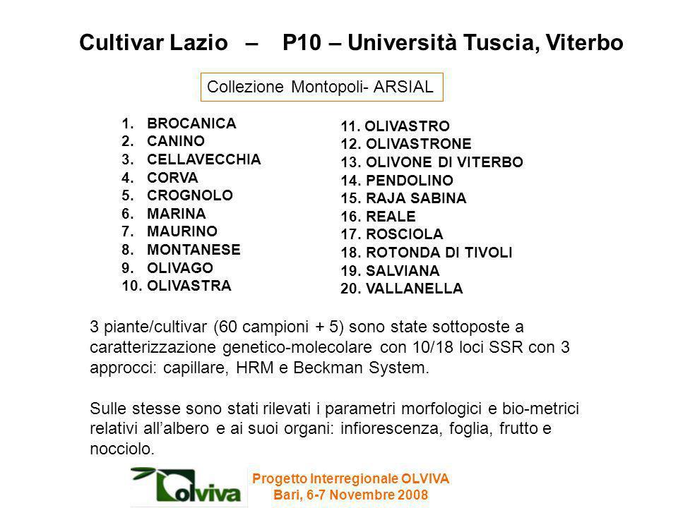Cultivar Lazio – P10 – Università Tuscia, Viterbo 1.BROCANICA 2.CANINO 3.CELLAVECCHIA 4.CORVA 5.CROGNOLO 6.MARINA 7.MAURINO 8.MONTANESE 9.OLIVAGO 10.O
