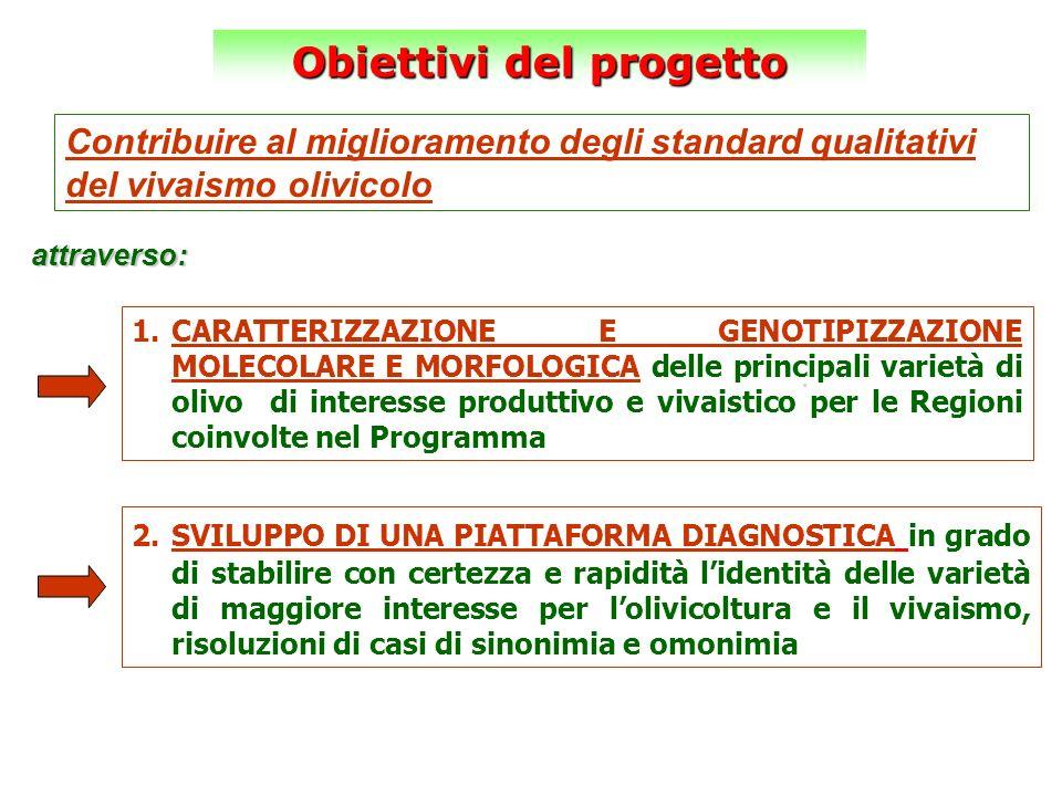 Contribuire al miglioramento degli standard qualitativi del vivaismo olivicolo. Obiettivi del progetto attraverso: 1.CARATTERIZZAZIONE E GENOTIPIZZAZI