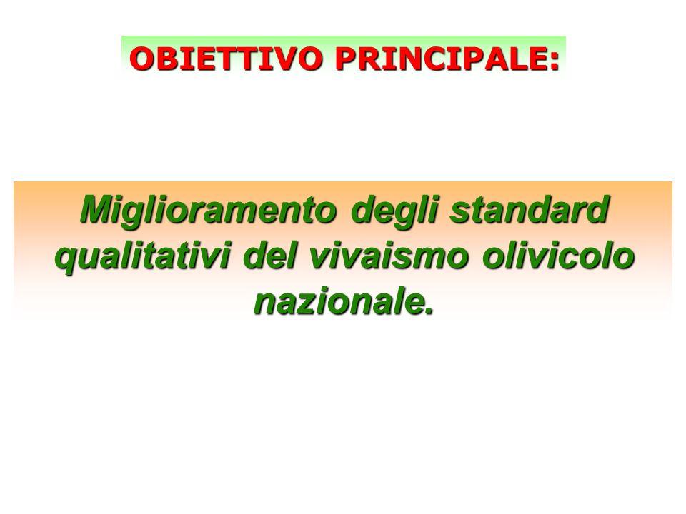 Miglioramento degli standard qualitativi del vivaismo olivicolo nazionale. OBIETTIVO PRINCIPALE: