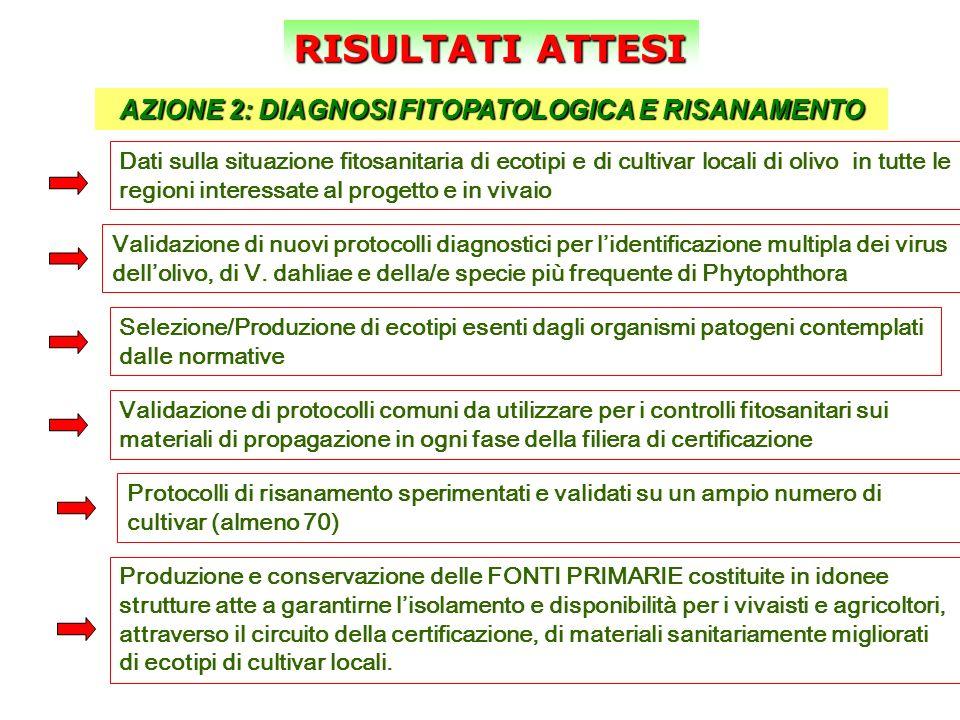 RISULTATI ATTESI AZIONE 2: DIAGNOSI FITOPATOLOGICA E RISANAMENTO Dati sulla situazione fitosanitaria di ecotipi e di cultivar locali di olivo in tutte