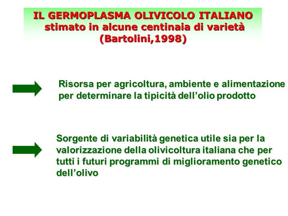 IL GERMOPLASMA OLIVICOLO ITALIANO stimato in alcune centinaia di varietà (Bartolini,1998) stimato in alcune centinaia di varietà (Bartolini,1998) Riso
