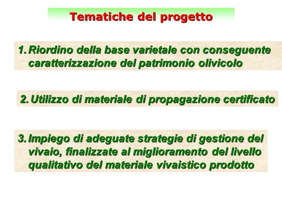 Tematiche del progetto 1.Riordino della base varietale con conseguente caratterizzazione del patrimonio olivicolo 2.Utilizzo di materiale di propagazi