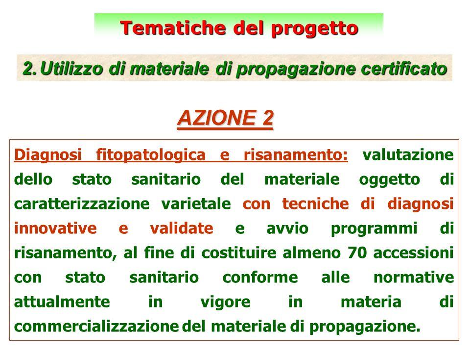 Tematiche del progetto 2.Utilizzo di materiale di propagazione certificato AZIONE 2 Diagnosi fitopatologica e risanamento: valutazione dello stato san