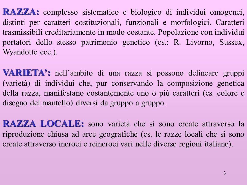 3 RAZZA: RAZZA: complesso sistematico e biologico di individui omogenei, distinti per caratteri costituzionali, funzionali e morfologici.
