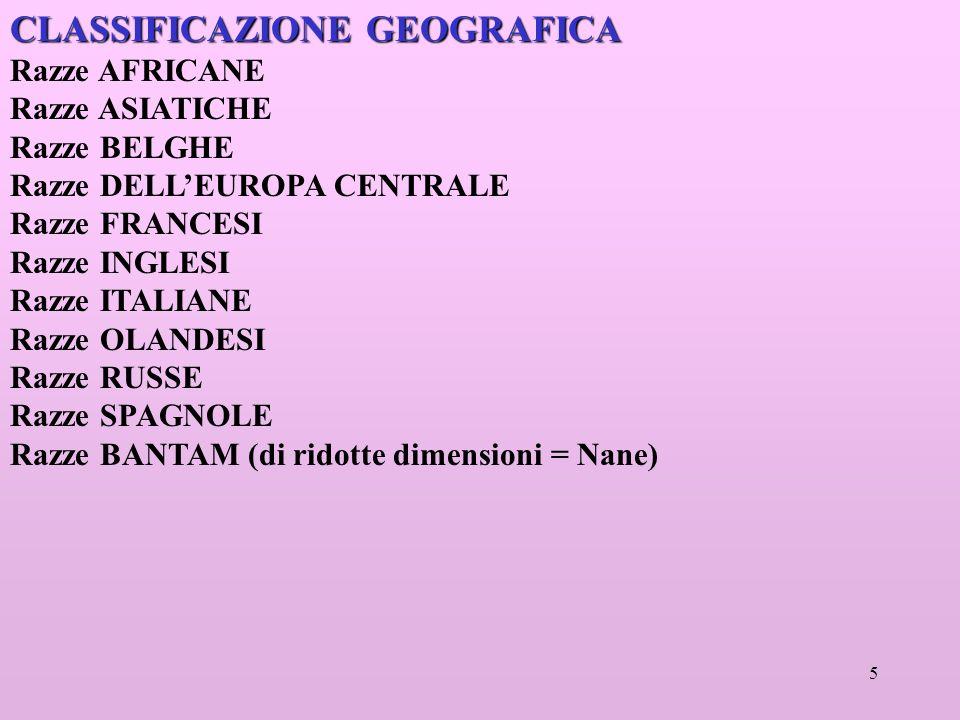 5 CLASSIFICAZIONE GEOGRAFICA Razze AFRICANE Razze ASIATICHE Razze BELGHE Razze DELLEUROPA CENTRALE Razze FRANCESI Razze INGLESI Razze ITALIANE Razze OLANDESI Razze RUSSE Razze SPAGNOLE Razze BANTAM (di ridotte dimensioni = Nane)