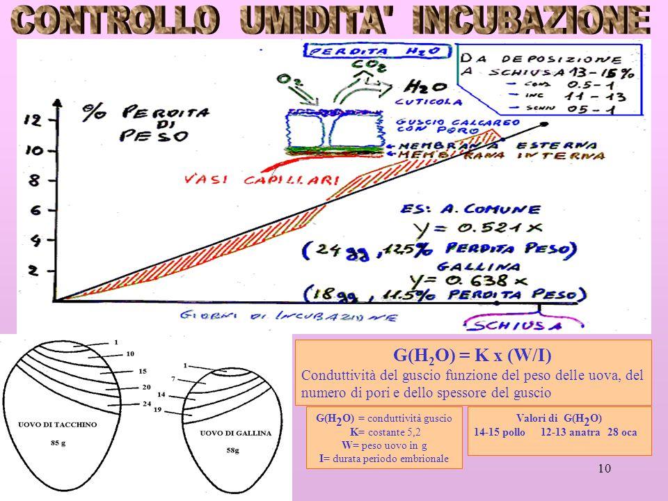 10 G(H 2 O) = K x (W/I) Conduttività del guscio funzione del peso delle uova, del numero di pori e dello spessore del guscio G(H 2 O) = conduttività guscio K= costante 5,2 W= peso uovo in g I= durata periodo embrionale Valori di G(H 2 O) 14-15 pollo 12-13 anatra28 oca
