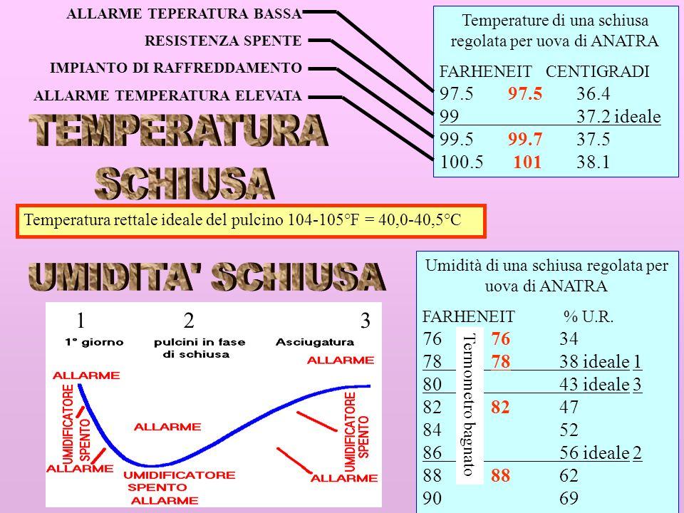 13 Temperature di una schiusa regolata per uova di ANATRA FARHENEIT CENTIGRADI 97.597.536.4 9937.2 ideale 99.599.7 37.5 100.5 101 38.1 ALLARME TEPERAT