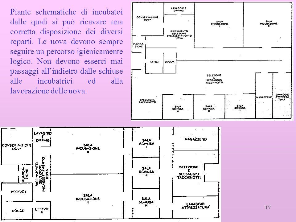 17 Piante schematiche di incubatoi dalle quali si può ricavare una corretta disposizione dei diversi reparti.