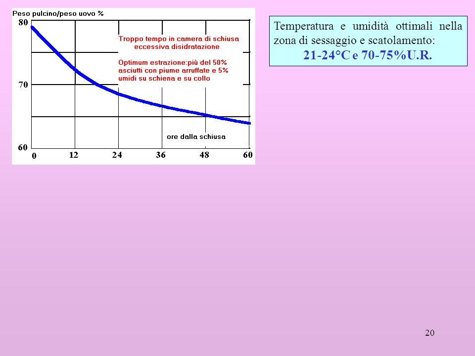20 Temperatura e umidità ottimali nella zona di sessaggio e scatolamento: 21-24°C e 70-75%U.R.