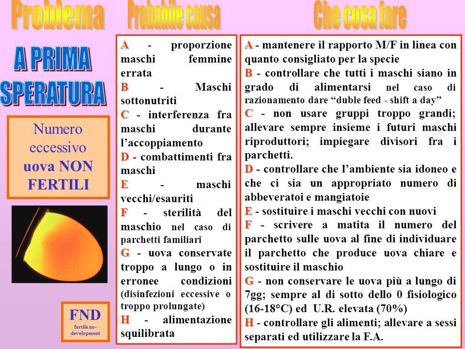 24 Numero eccessivo uova NON FERTILI A A - proporzione maschi femmine errata B B - Maschi sottonutriti C C - interferenza fra maschi durante laccoppia