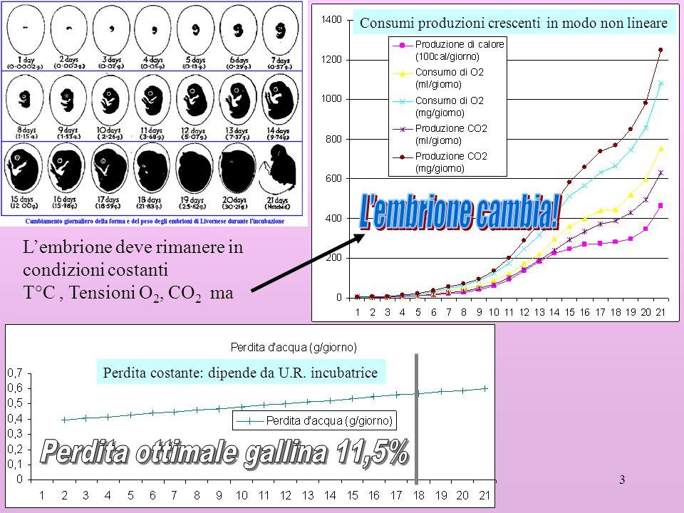 3 Perdita costante: dipende da U.R. incubatrice Consumi produzioni crescenti in modo non lineare Lembrione deve rimanere in condizioni costanti T°C, T