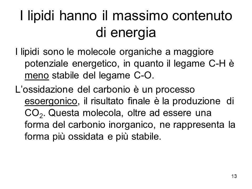 13 I lipidi hanno il massimo contenuto di energia I lipidi sono le molecole organiche a maggiore potenziale energetico, in quanto il legame C-H è meno stabile del legame C-O.