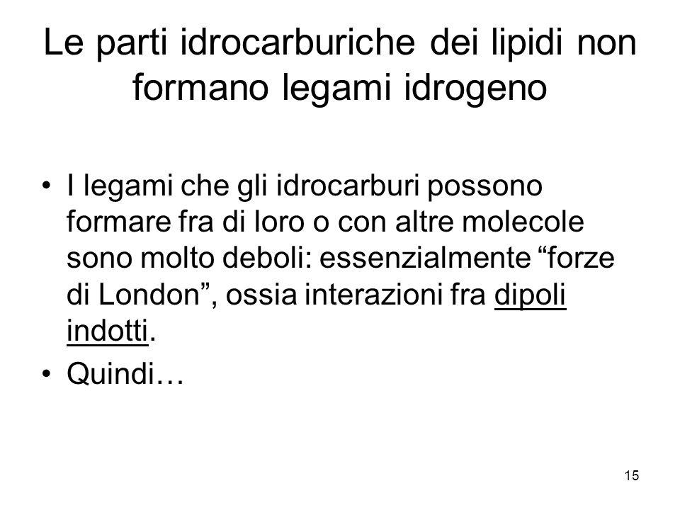 15 Le parti idrocarburiche dei lipidi non formano legami idrogeno I legami che gli idrocarburi possono formare fra di loro o con altre molecole sono molto deboli: essenzialmente forze di London, ossia interazioni fra dipoli indotti.