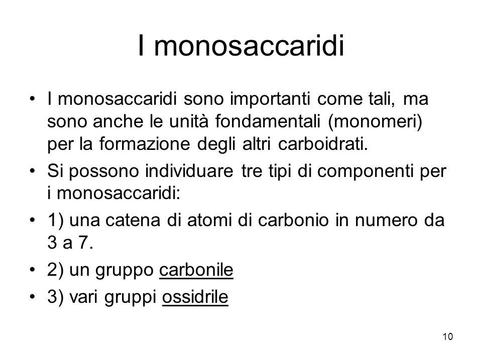 10 I monosaccaridi I monosaccaridi sono importanti come tali, ma sono anche le unità fondamentali (monomeri) per la formazione degli altri carboidrati