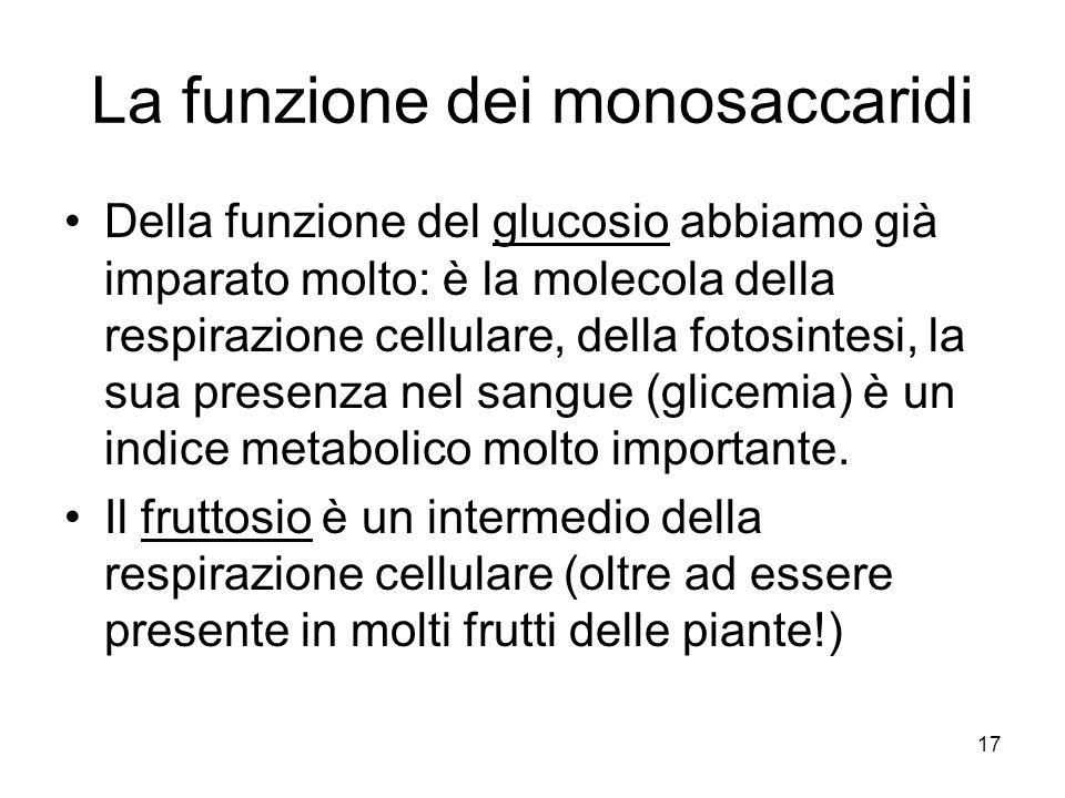 17 La funzione dei monosaccaridi Della funzione del glucosio abbiamo già imparato molto: è la molecola della respirazione cellulare, della fotosintesi