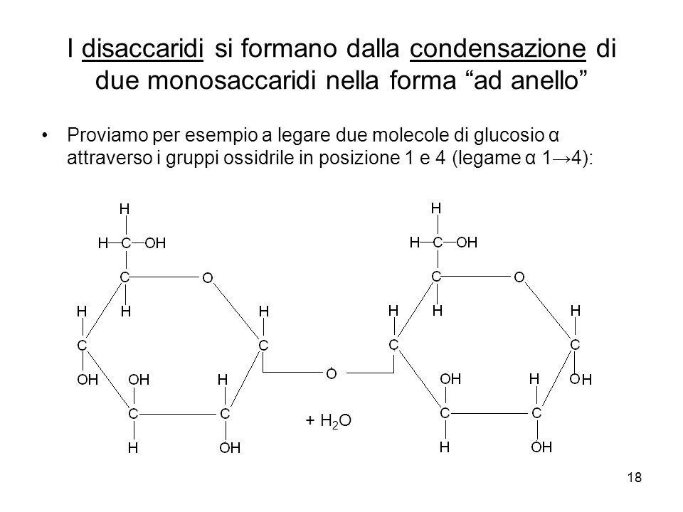 18 I disaccaridi si formano dalla condensazione di due monosaccaridi nella forma ad anello Proviamo per esempio a legare due molecole di glucosio α at
