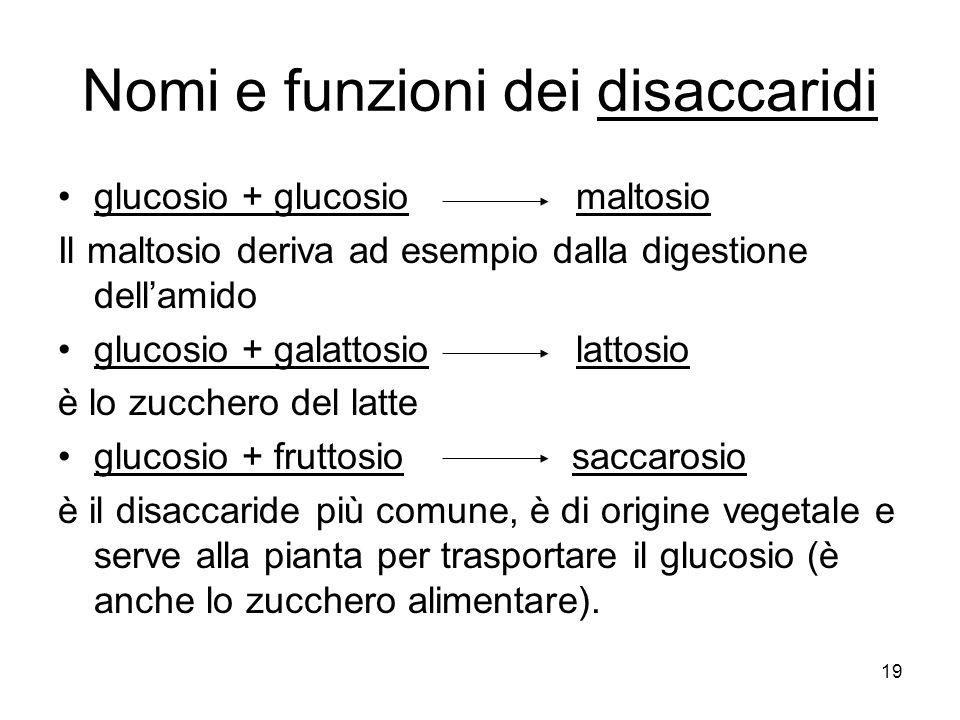 19 Nomi e funzioni dei disaccaridi glucosio + glucosio maltosio Il maltosio deriva ad esempio dalla digestione dellamido glucosio + galattosio lattosi