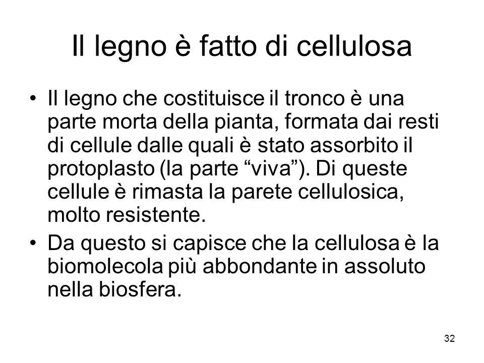 32 Il legno è fatto di cellulosa Il legno che costituisce il tronco è una parte morta della pianta, formata dai resti di cellule dalle quali è stato a