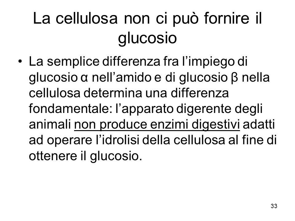 33 La cellulosa non ci può fornire il glucosio La semplice differenza fra limpiego di glucosio α nellamido e di glucosio β nella cellulosa determina u