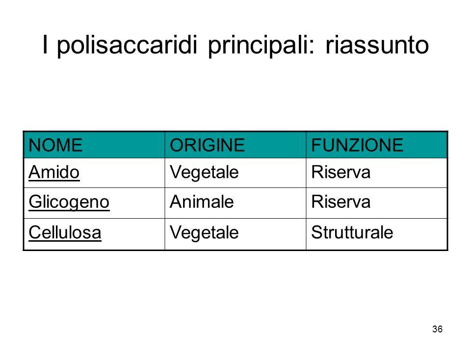 36 I polisaccaridi principali: riassunto NOMEORIGINEFUNZIONE AmidoVegetaleRiserva GlicogenoAnimaleRiserva CellulosaVegetaleStrutturale