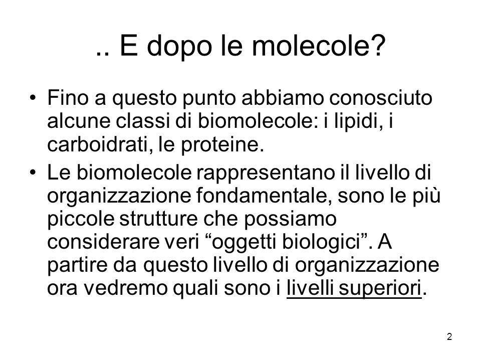 3 I livelli di organizzazione Molecole Aggregati supermolecolari Organuli cellulari Cellule Tessuti Organi Apparati e sistemi Organismi Popolazioni Specie Questa serie rappresenta uno schema gerarchico dei diversi gradi di organizzazione a livello dei quali possiamo studiare le strutture biologiche.