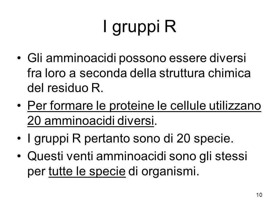10 I gruppi R Gli amminoacidi possono essere diversi fra loro a seconda della struttura chimica del residuo R. Per formare le proteine le cellule util