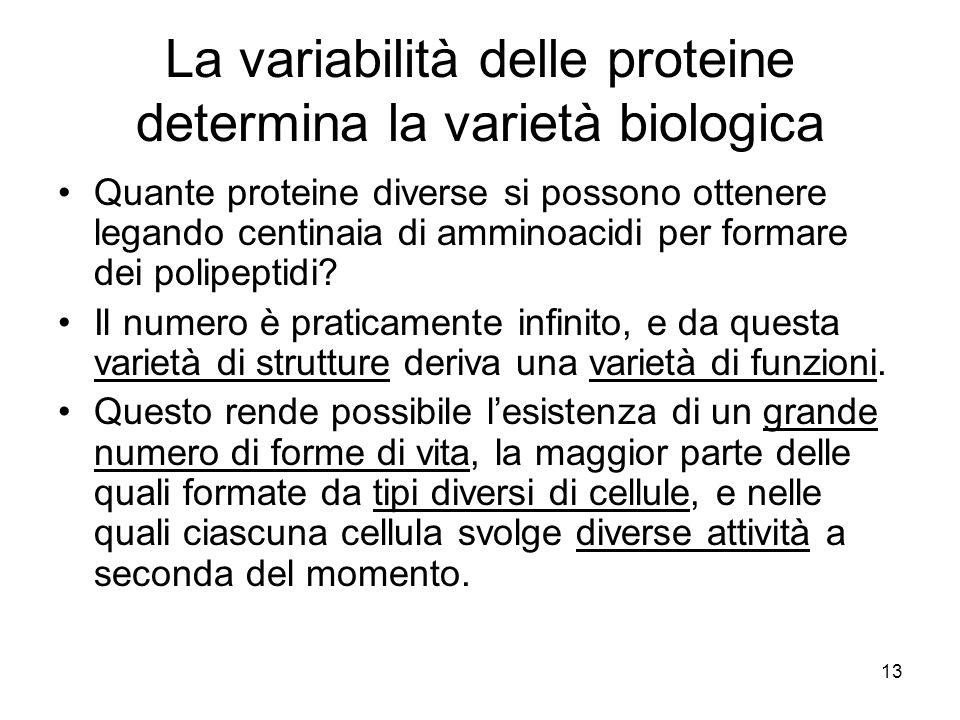 13 La variabilità delle proteine determina la varietà biologica Quante proteine diverse si possono ottenere legando centinaia di amminoacidi per forma
