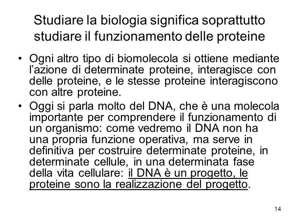 14 Studiare la biologia significa soprattutto studiare il funzionamento delle proteine Ogni altro tipo di biomolecola si ottiene mediante lazione di d