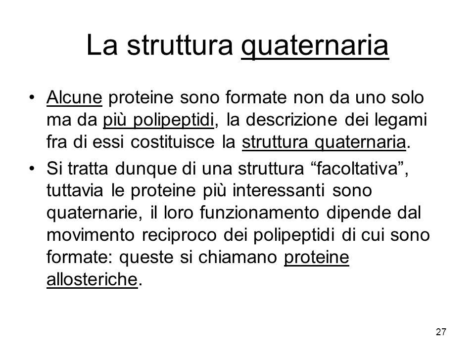 27 La struttura quaternaria Alcune proteine sono formate non da uno solo ma da più polipeptidi, la descrizione dei legami fra di essi costituisce la s