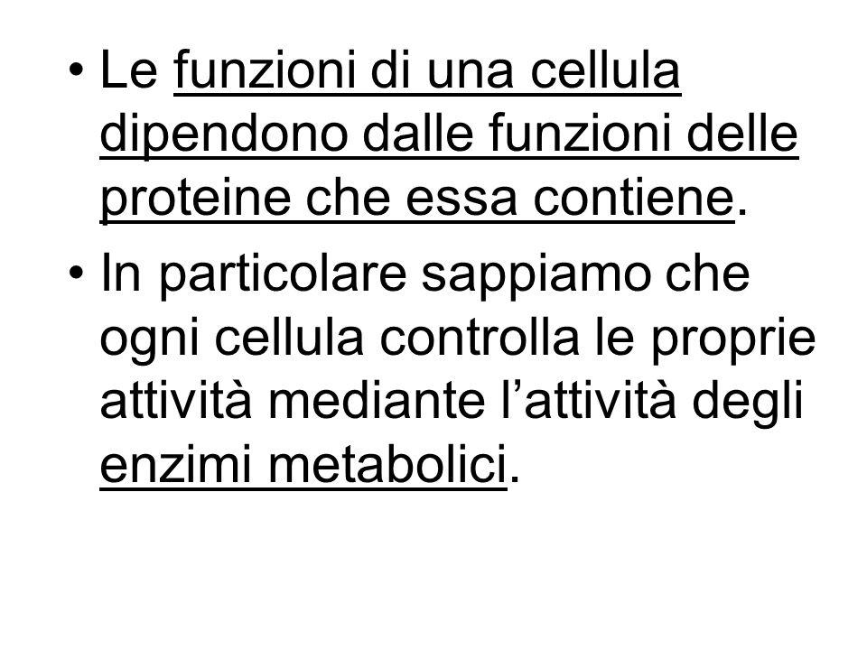 Le funzioni di una cellula dipendono dalle funzioni delle proteine che essa contiene. In particolare sappiamo che ogni cellula controlla le proprie at
