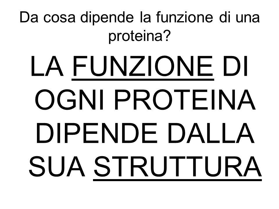 Da cosa dipende la funzione di una proteina? LA FUNZIONE DI OGNI PROTEINA DIPENDE DALLA SUA STRUTTURA