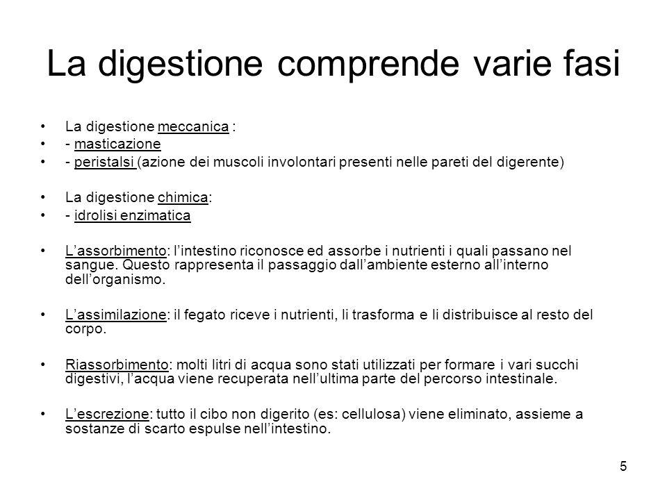 5 La digestione comprende varie fasi La digestione meccanica : - masticazione - peristalsi (azione dei muscoli involontari presenti nelle pareti del d