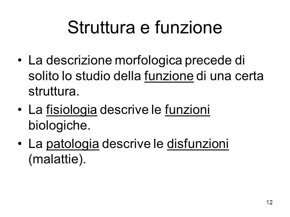 12 Struttura e funzione La descrizione morfologica precede di solito lo studio della funzione di una certa struttura. La fisiologia descrive le funzio