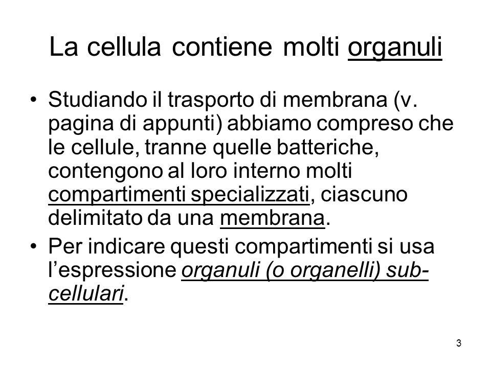 3 La cellula contiene molti organuli Studiando il trasporto di membrana (v. pagina di appunti) abbiamo compreso che le cellule, tranne quelle batteric