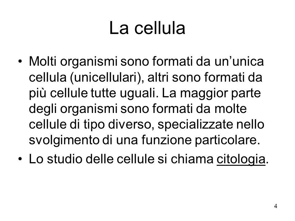 4 La cellula Molti organismi sono formati da ununica cellula (unicellulari), altri sono formati da più cellule tutte uguali. La maggior parte degli or