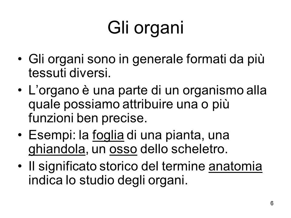 6 Gli organi Gli organi sono in generale formati da più tessuti diversi. Lorgano è una parte di un organismo alla quale possiamo attribuire una o più