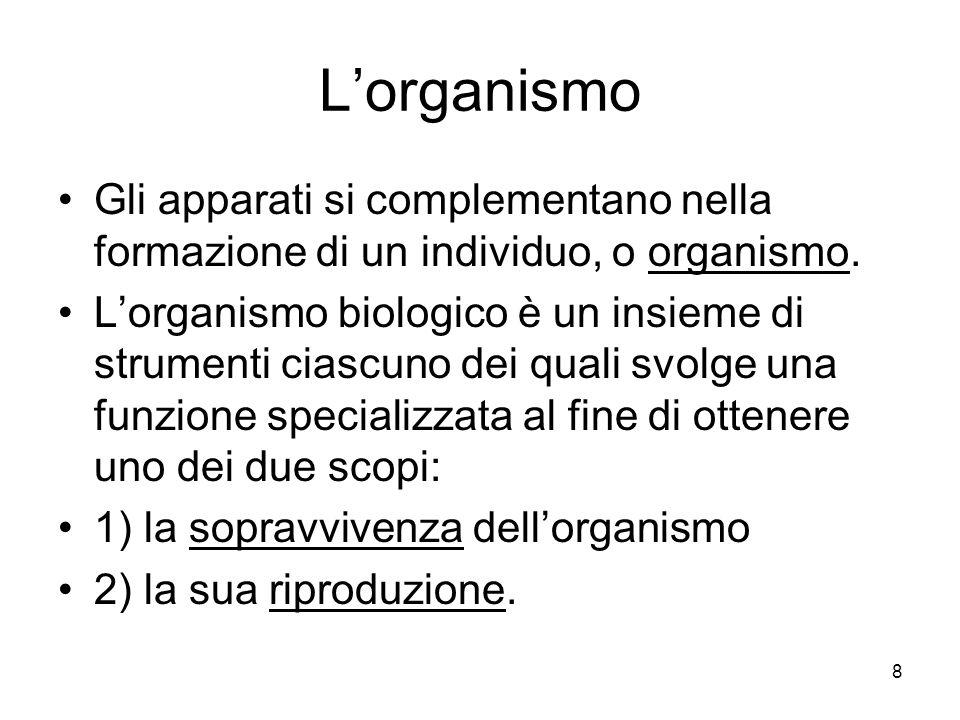 8 Lorganismo Gli apparati si complementano nella formazione di un individuo, o organismo. Lorganismo biologico è un insieme di strumenti ciascuno dei