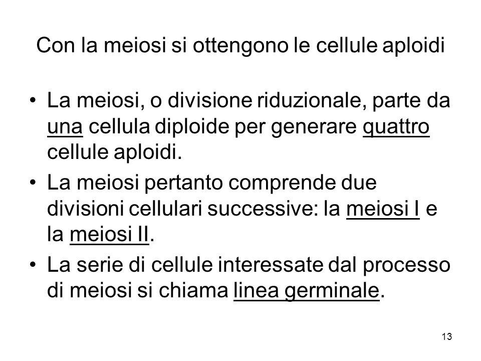 13 Con la meiosi si ottengono le cellule aploidi La meiosi, o divisione riduzionale, parte da una cellula diploide per generare quattro cellule aploid