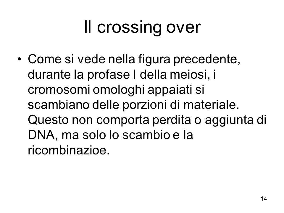 14 Il crossing over Come si vede nella figura precedente, durante la profase I della meiosi, i cromosomi omologhi appaiati si scambiano delle porzioni di materiale.