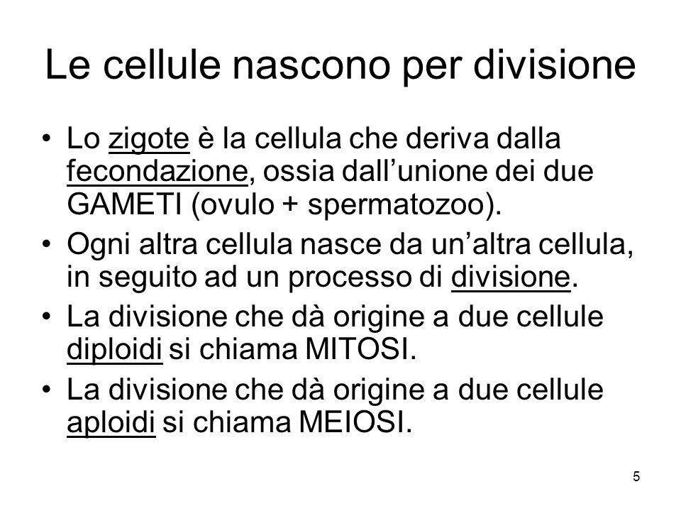 5 Le cellule nascono per divisione Lo zigote è la cellula che deriva dalla fecondazione, ossia dallunione dei due GAMETI (ovulo + spermatozoo). Ogni a