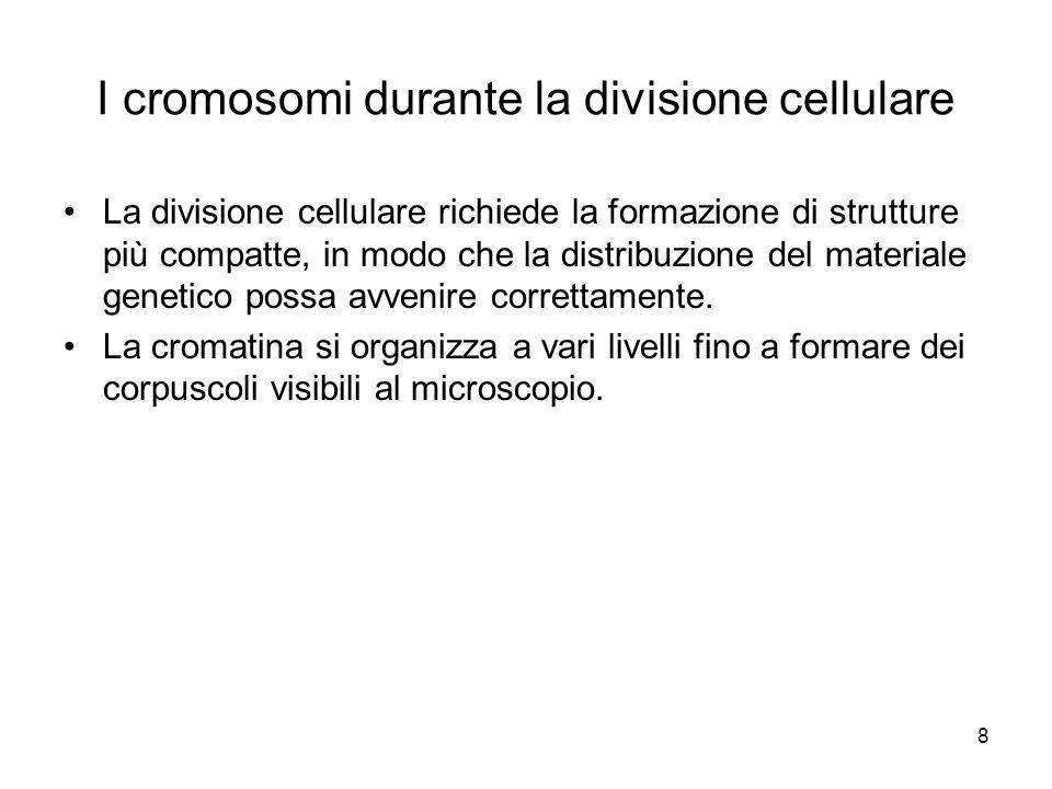8 I cromosomi durante la divisione cellulare La divisione cellulare richiede la formazione di strutture più compatte, in modo che la distribuzione del materiale genetico possa avvenire correttamente.