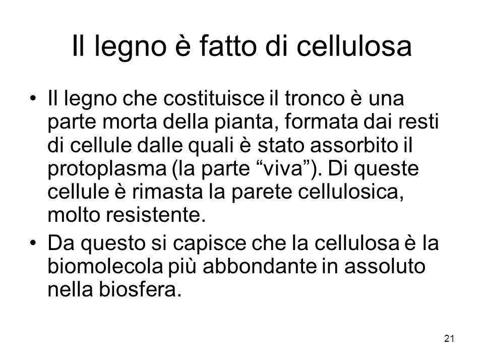 21 Il legno è fatto di cellulosa Il legno che costituisce il tronco è una parte morta della pianta, formata dai resti di cellule dalle quali è stato a