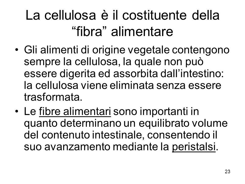 23 La cellulosa è il costituente della fibra alimentare Gli alimenti di origine vegetale contengono sempre la cellulosa, la quale non può essere diger