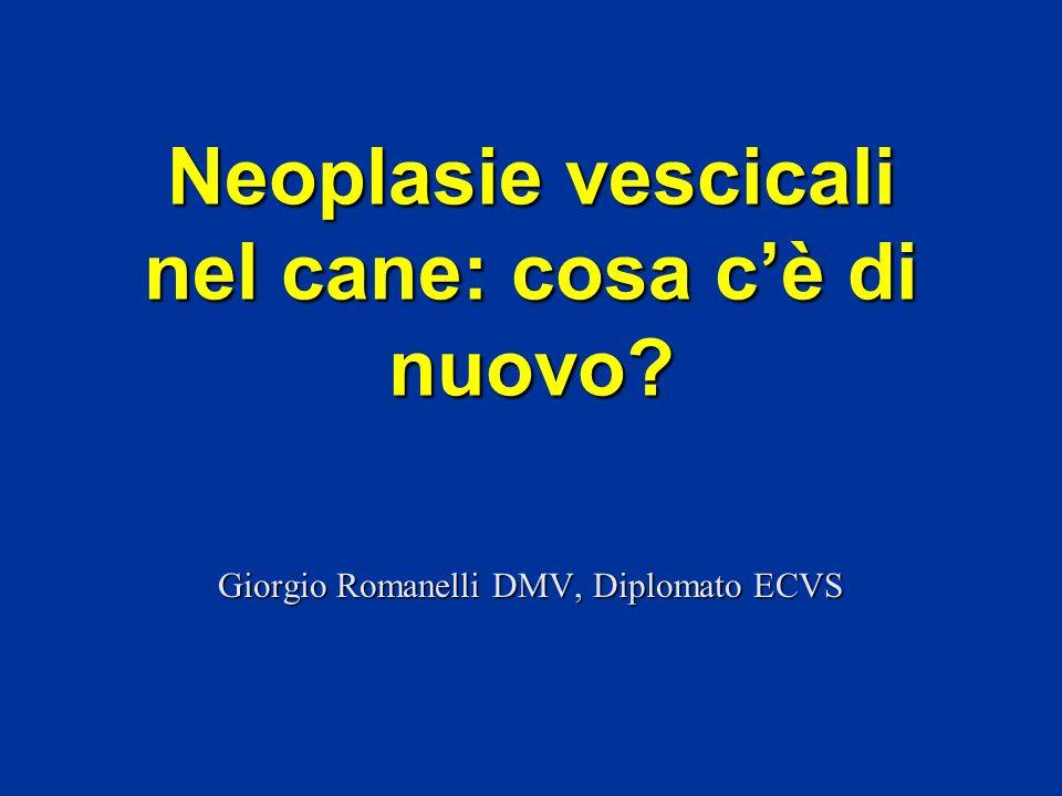 Giorgio Romanelli DMV, Diplomato ECVS Neoplasie vescicali nel cane: cosa cè di nuovo?
