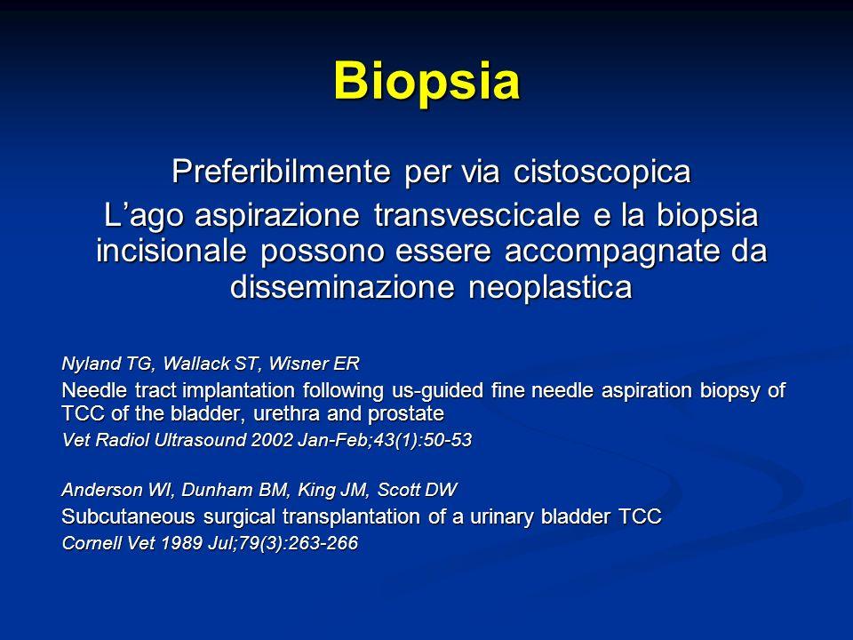 Biopsia Preferibilmente per via cistoscopica Lago aspirazione transvescicale e la biopsia incisionale possono essere accompagnate da disseminazione neoplastica Nyland TG, Wallack ST, Wisner ER Needle tract implantation following us-guided fine needle aspiration biopsy of TCC of the bladder, urethra and prostate Vet Radiol Ultrasound 2002 Jan-Feb;43(1):50-53 Anderson WI, Dunham BM, King JM, Scott DW Subcutaneous surgical transplantation of a urinary bladder TCC Cornell Vet 1989 Jul;79(3):263-266