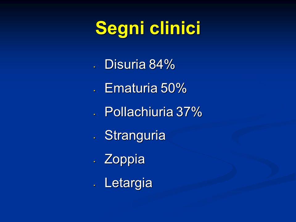 Segni clinici Disuria 84% Disuria 84% Ematuria 50% Ematuria 50% Pollachiuria 37% Pollachiuria 37% Stranguria Stranguria Zoppia Zoppia Letargia Letargia